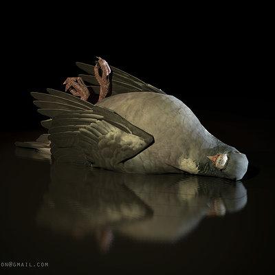 Ben wilson pigeon a