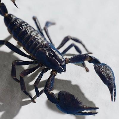 Lisa m scorpion pic