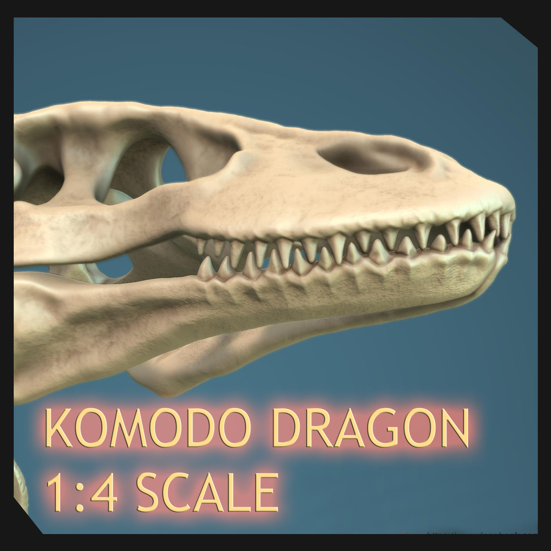 Komodo Dragon Skeleton By Sergio Mengual