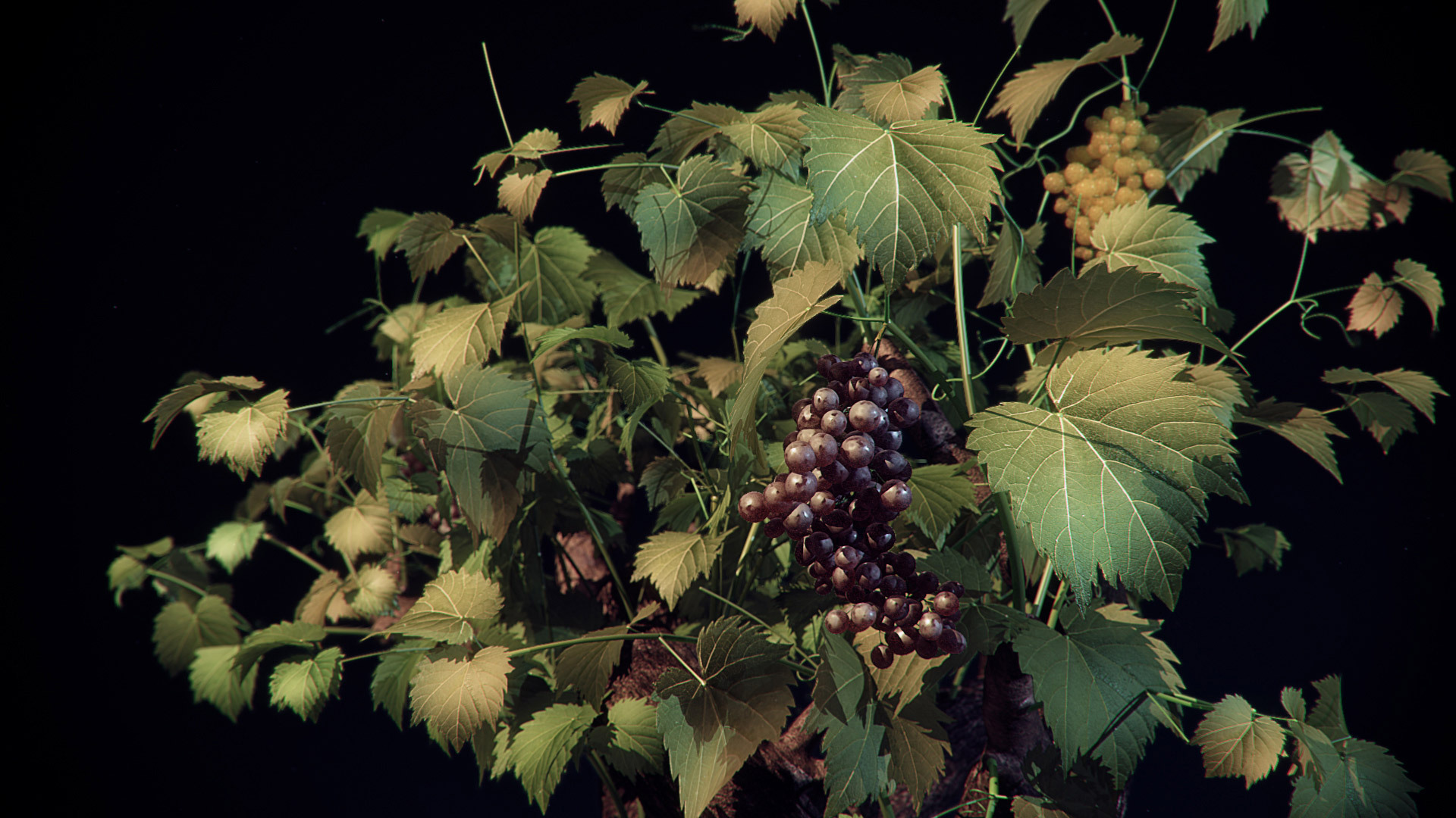07 the vine hd