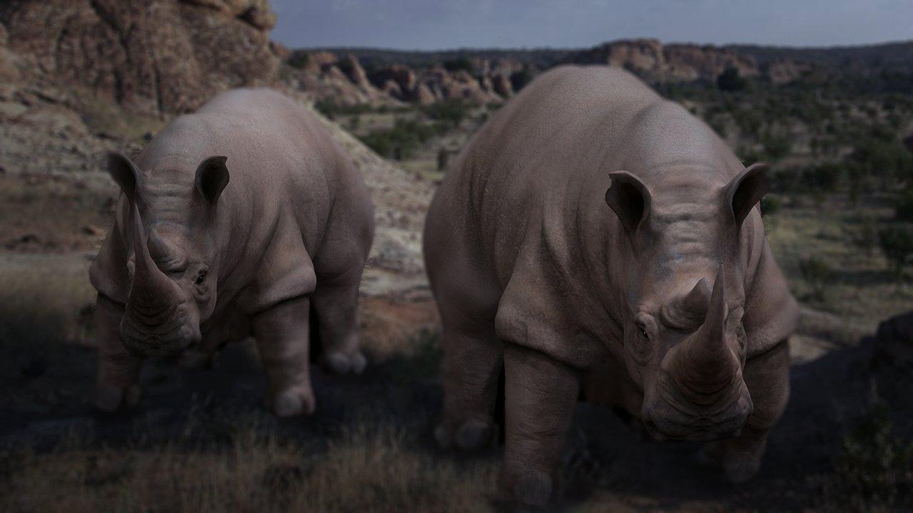 Brian dolan rhinoblack