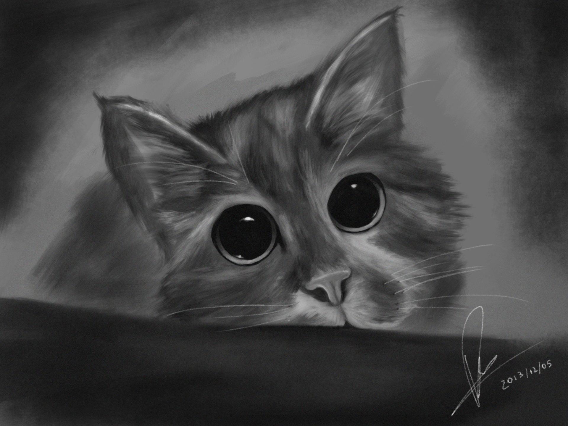 Raveen rajadorai cat