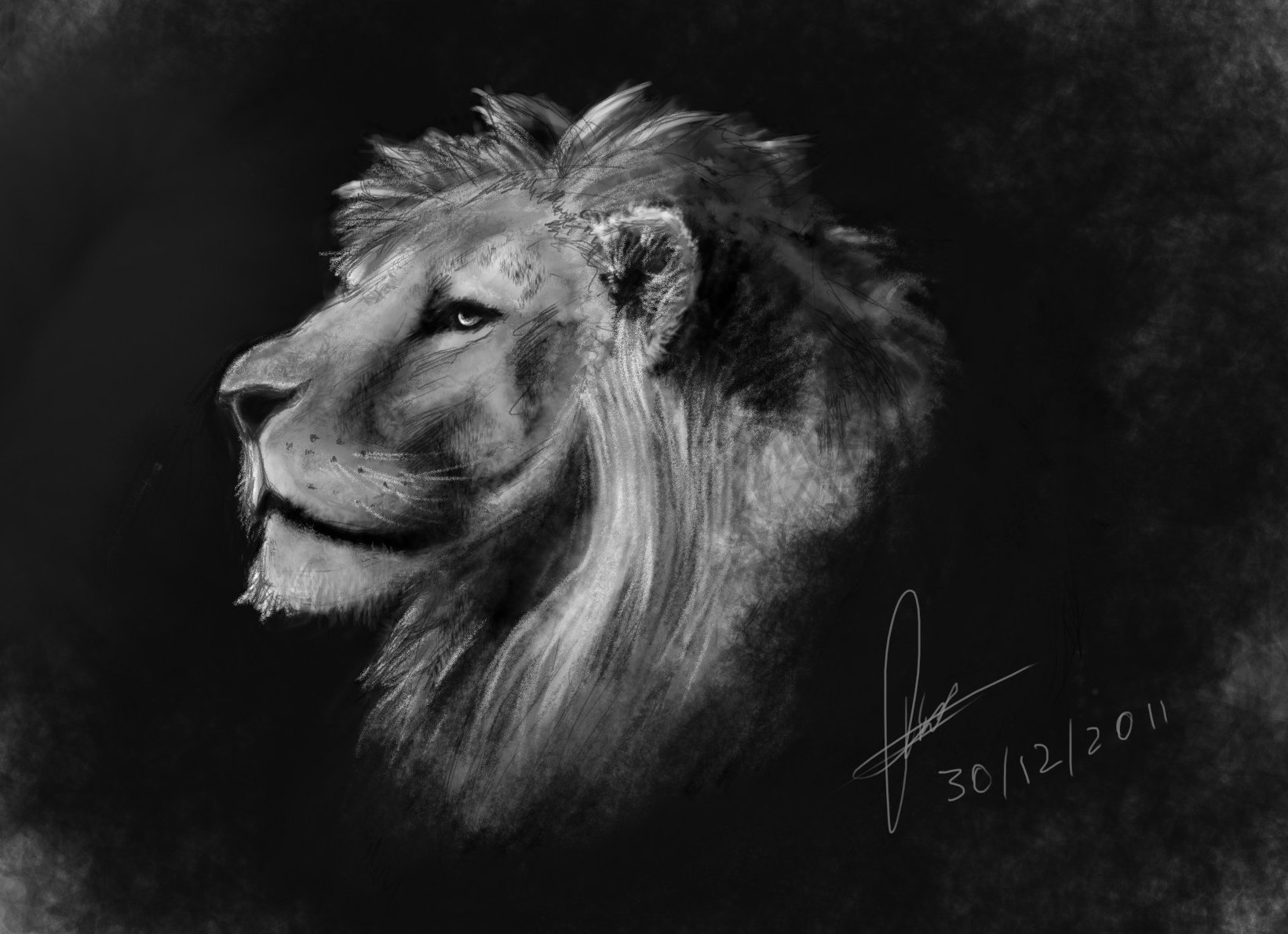 Raveen rajadorai lionsketch 01