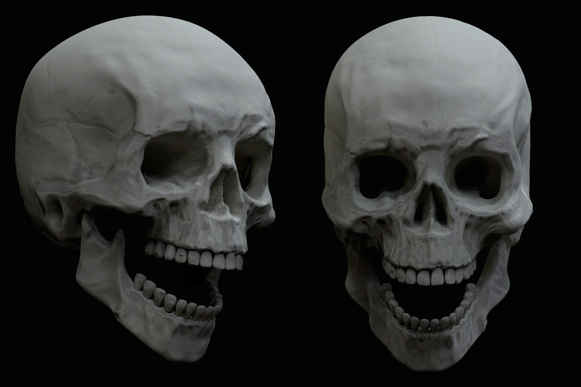 Brian dolan skullstudy