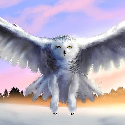 Nick minor snowy owl