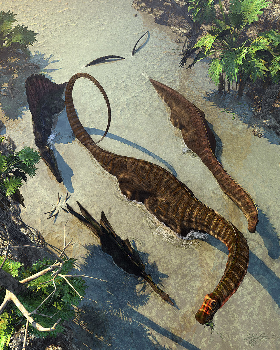 Kurt miller apatosaurus from above