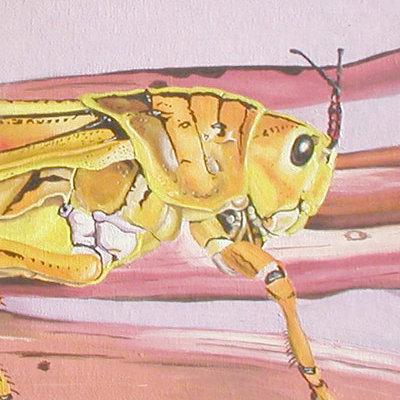 K fairbanks grasshopper by k fairbanks