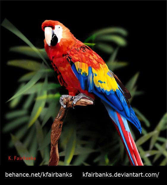 K fairbanks parrot by k fairbanks