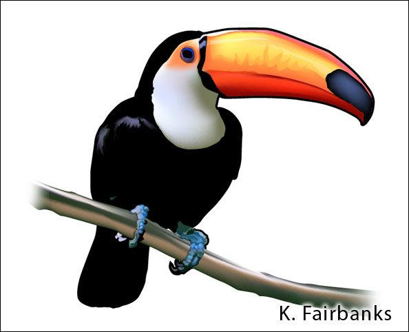 K fairbanks toucancloseup1bykfairbanks