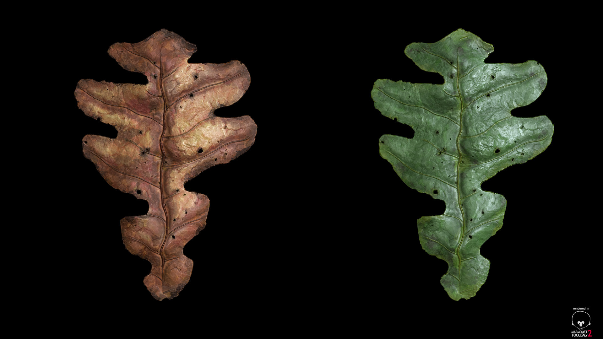 sebastian-schade-leaf1.jpg?1436909614