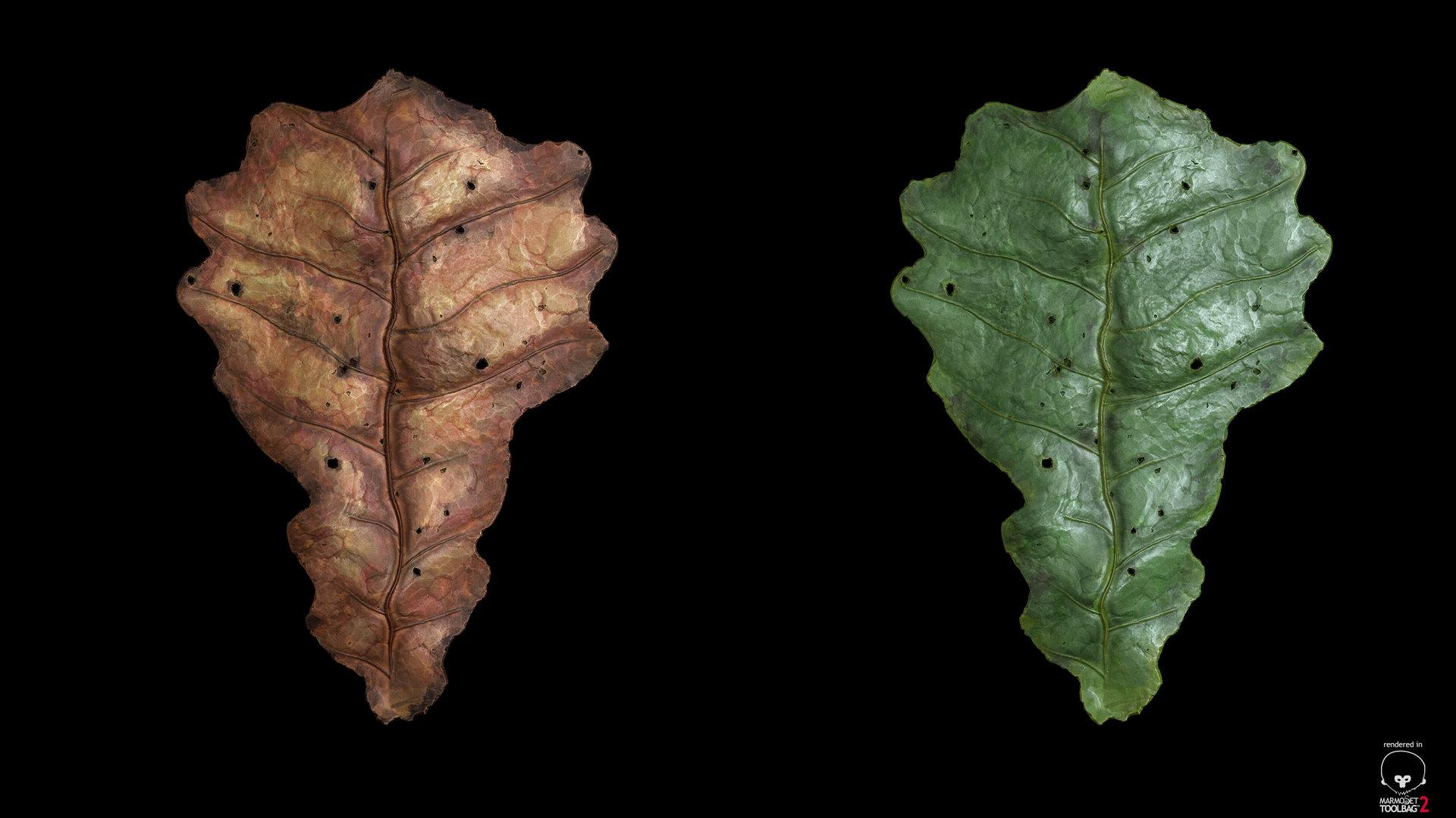 sebastian-schade-leaf2.jpg?1436909617