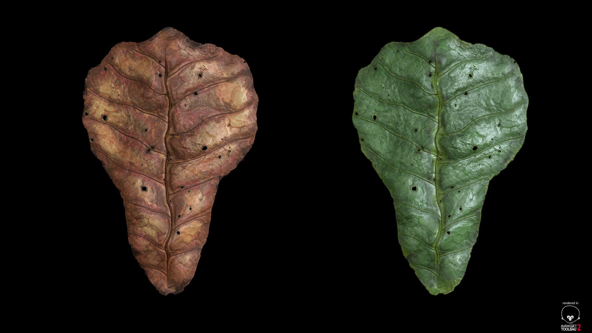 sebastian-schade-leaf3.jpg?1436909619
