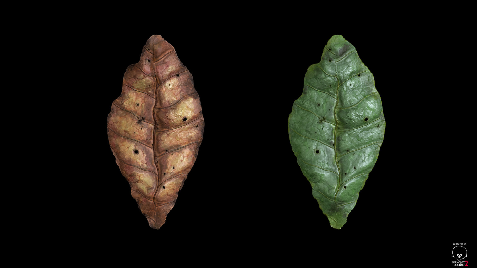sebastian-schade-leaf4.jpg?1436909621
