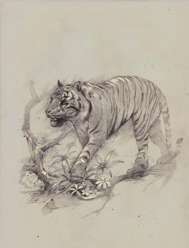 Bobby rebholz tigersmall