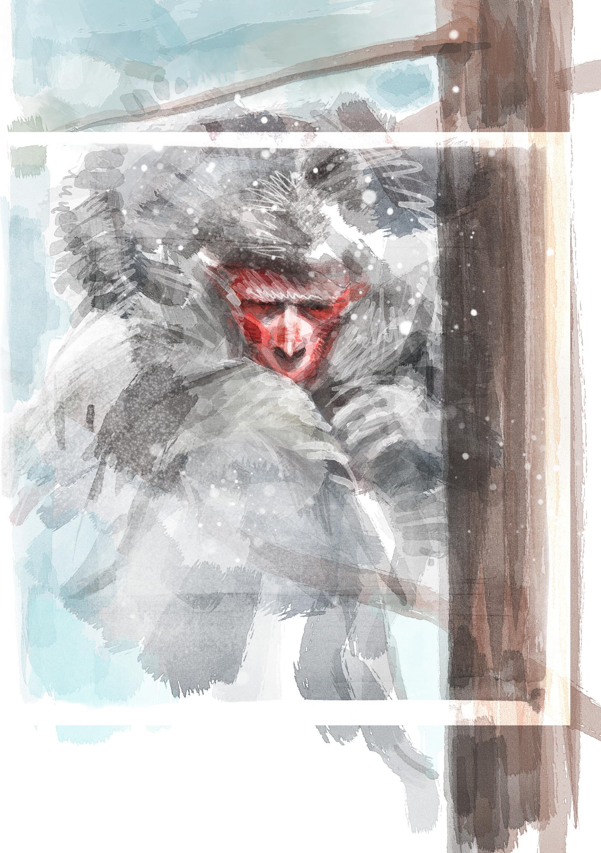 Fabien alquier snow monkey