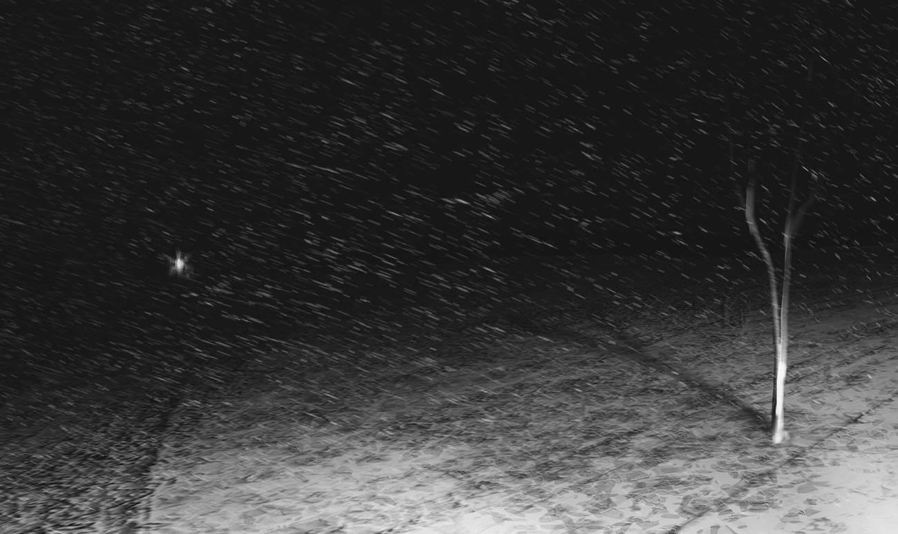 Burak cinar snow tree