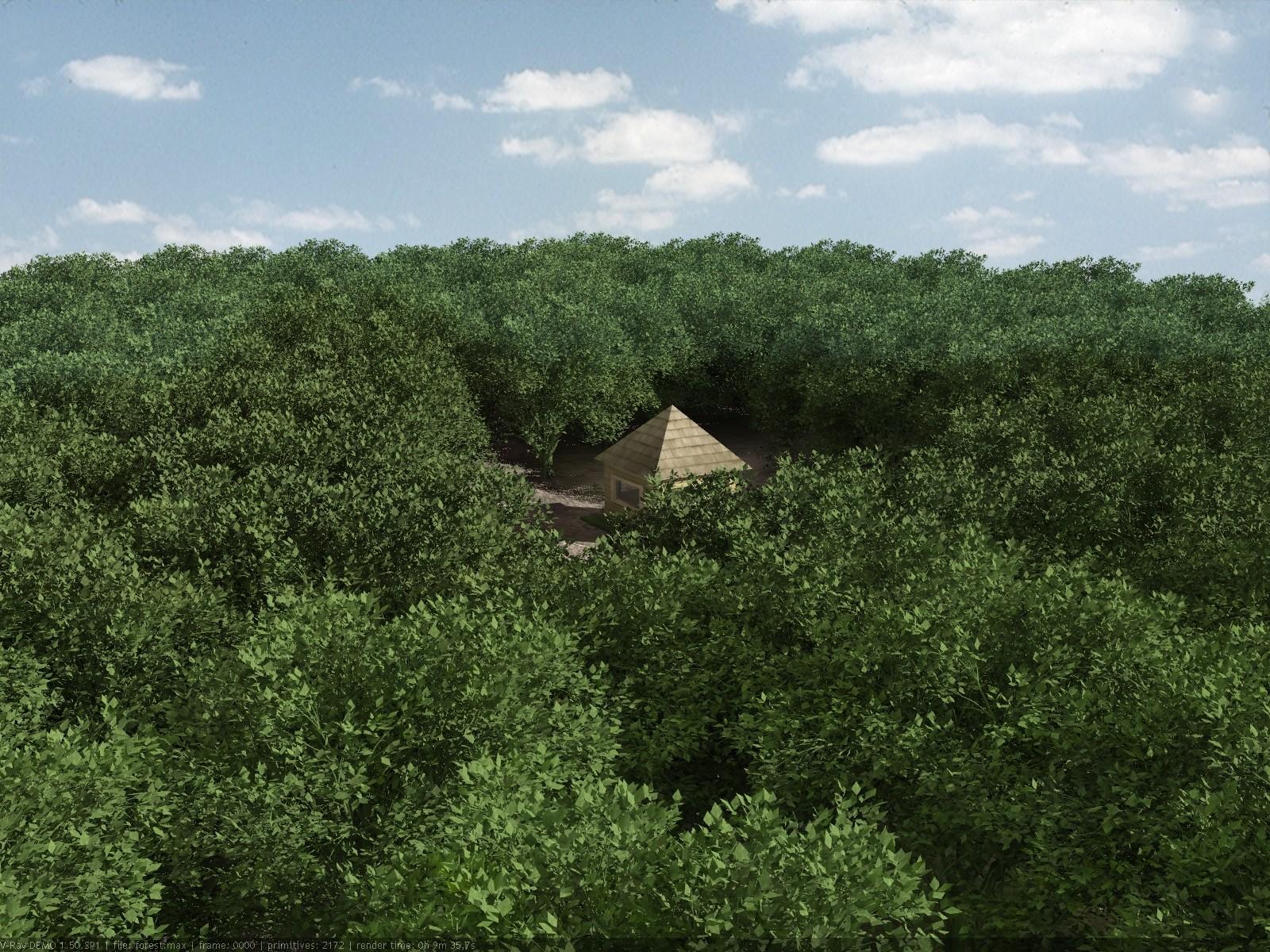 Andrew krivulya forest