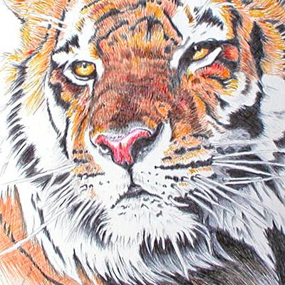 K fairbanks tigeryelloweyes by kfairbanks