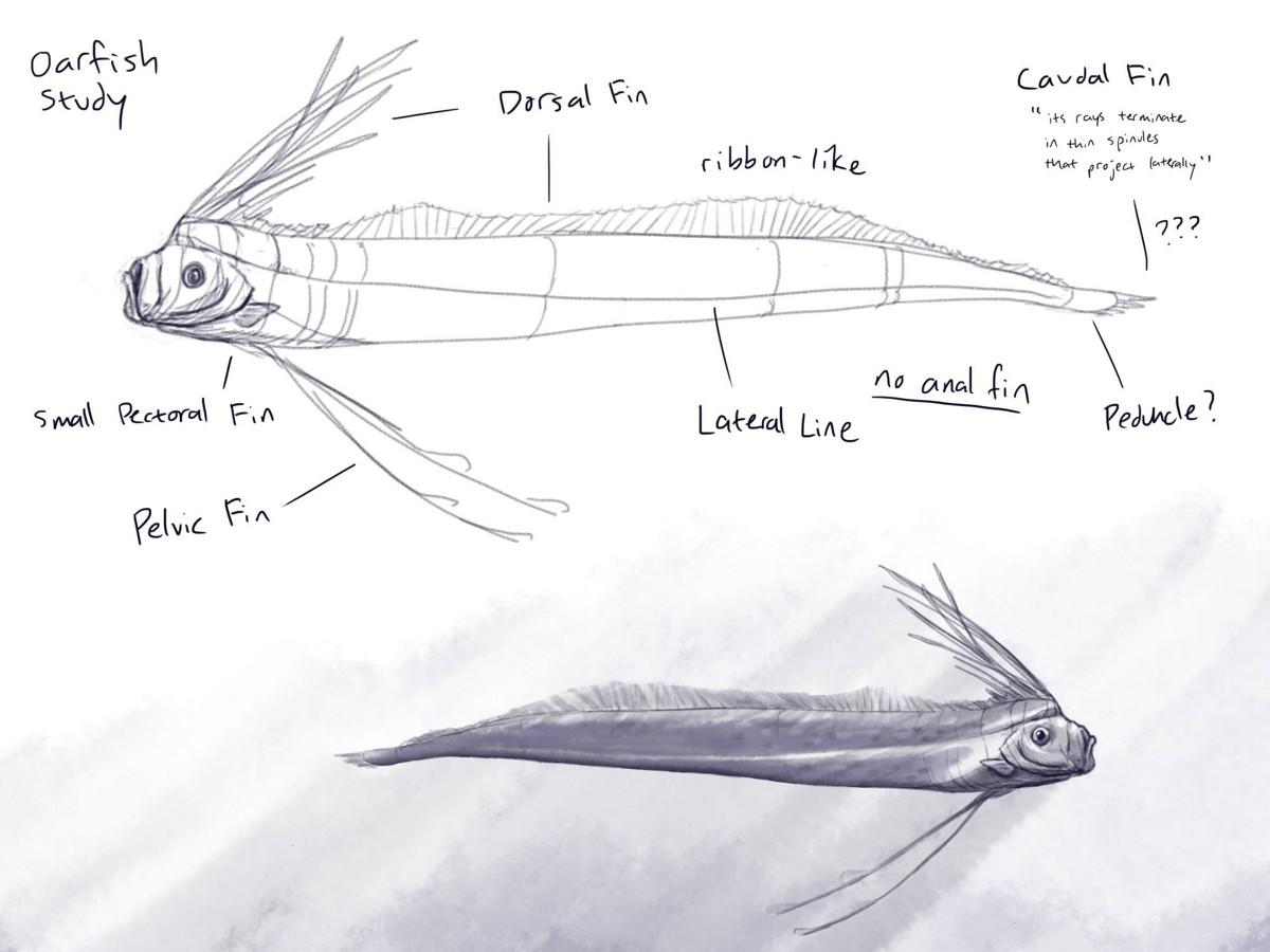 Penny wilkerson penelope wilkerson wk8 oarfish