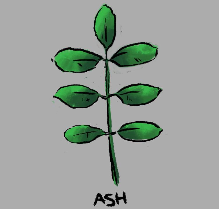 Ethan yazel leaf ash