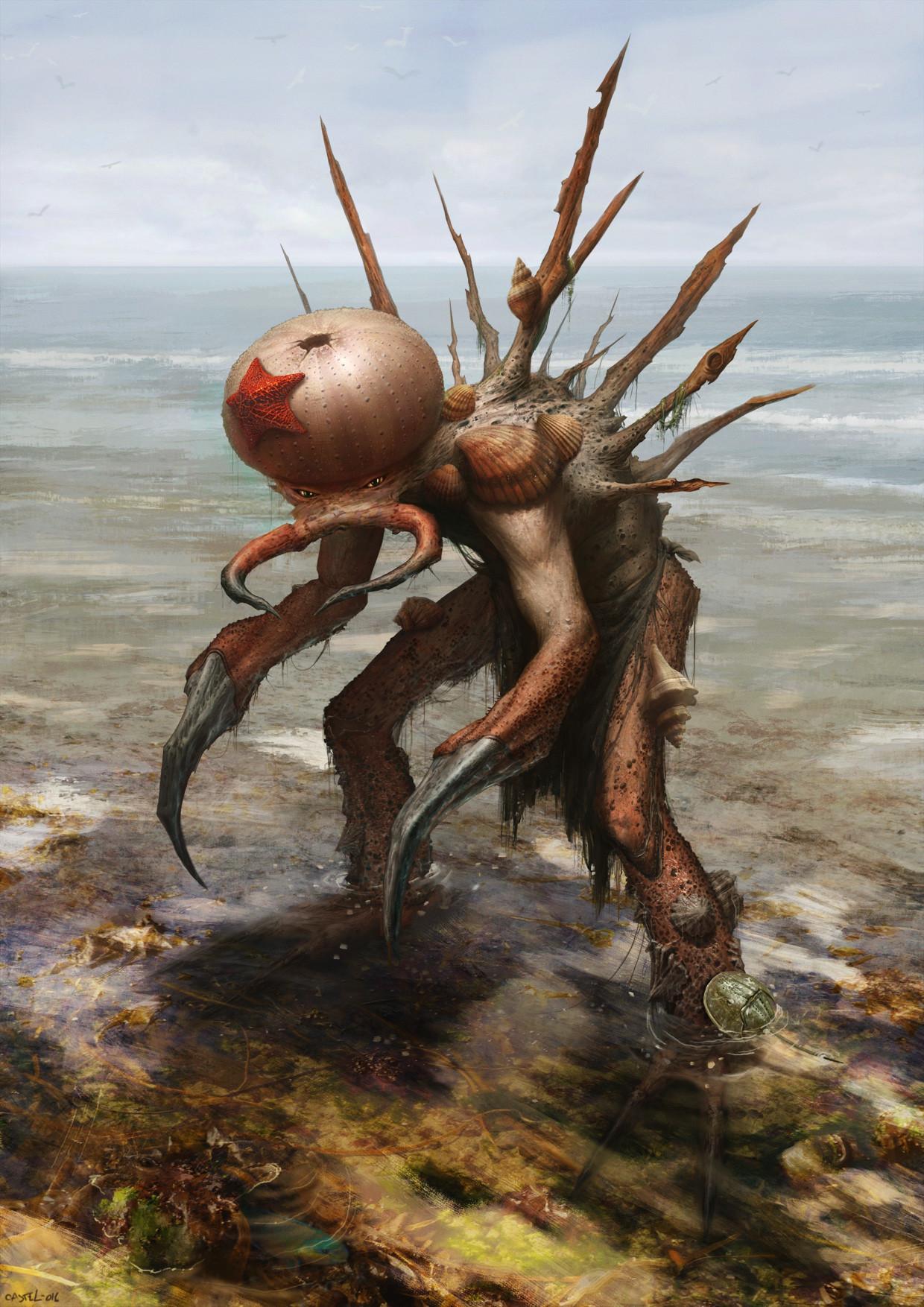 Quentin castel crabe boi fin contrastes