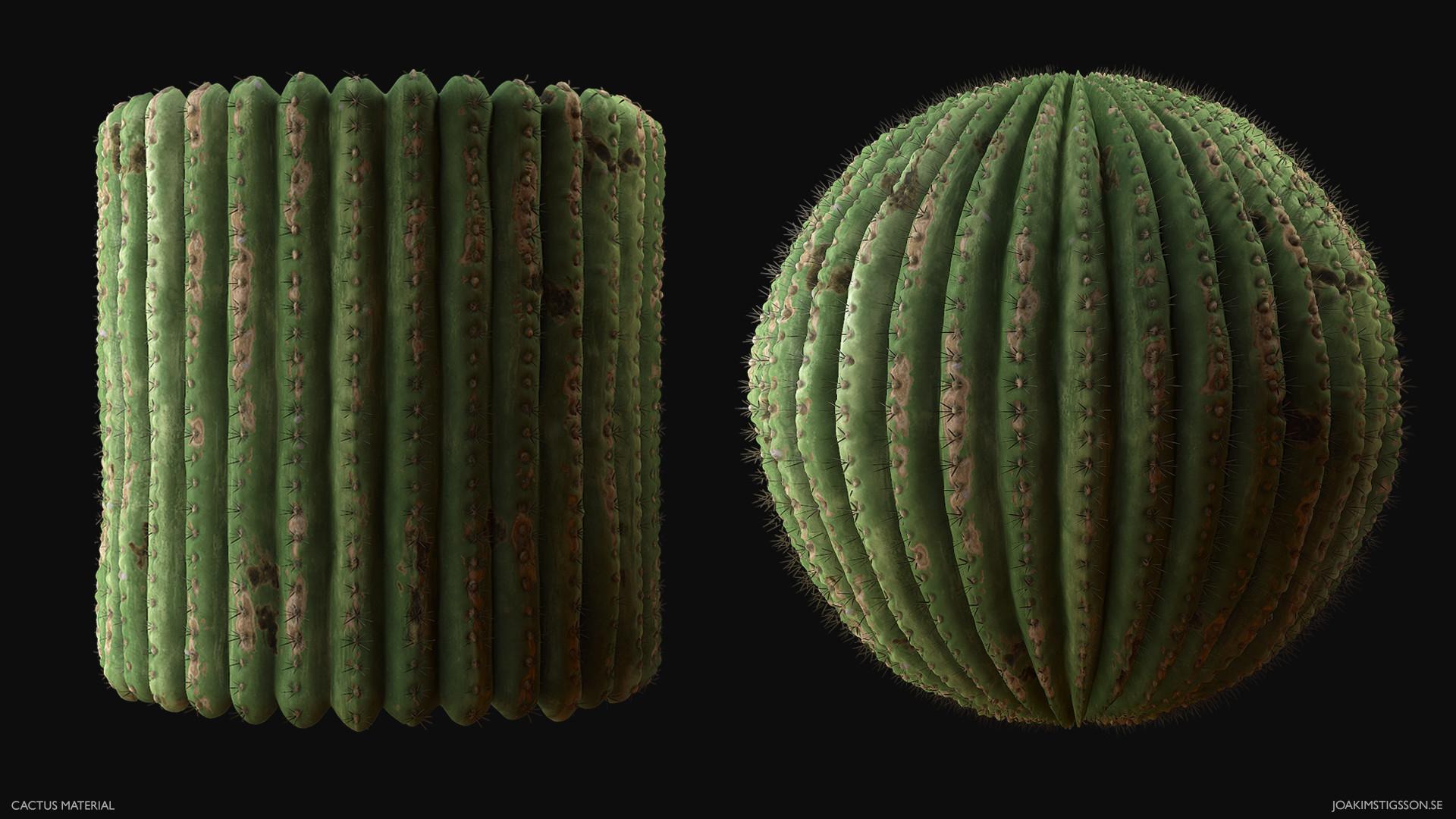 Joakim stigsson cactus 01