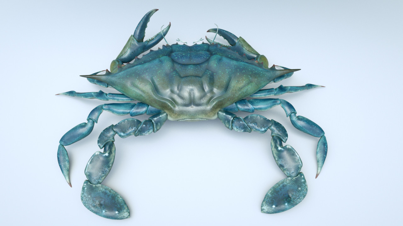 Eric keller crab02