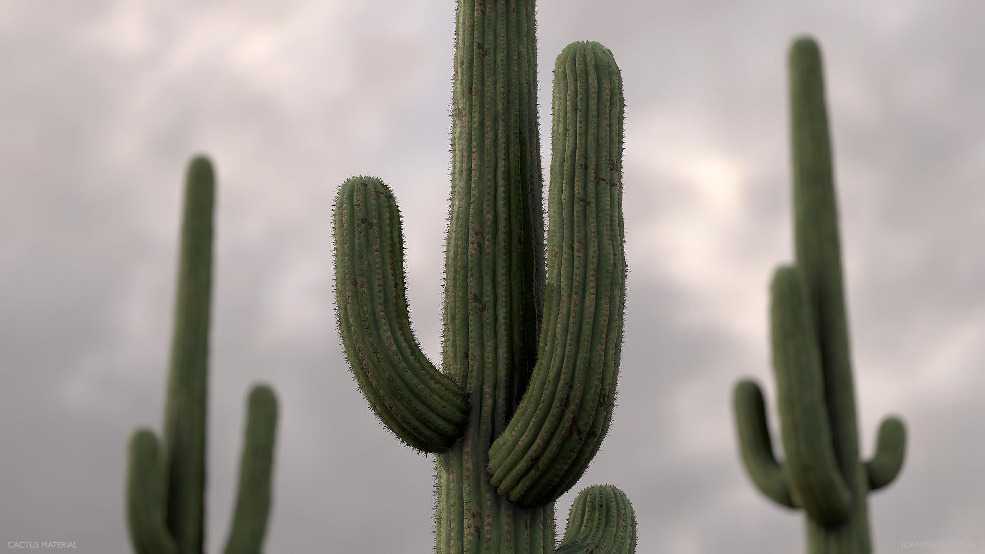 Joakim stigsson cactus 02 model