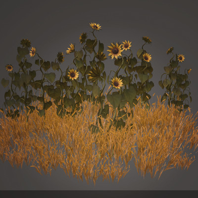 Rachel noy sunflowers2