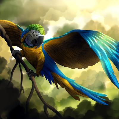 Jeff vehrs bluegold macaw lr