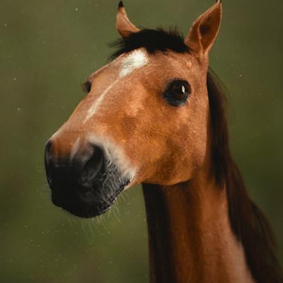 Anais barbeau sanction horse render01