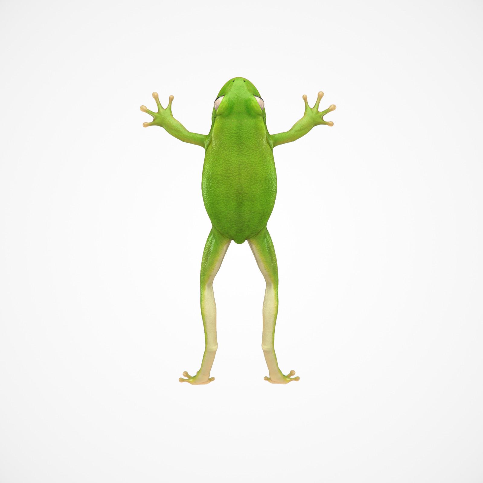 Cgmonkeyking fd kps frog test02 pn01 pp 0002