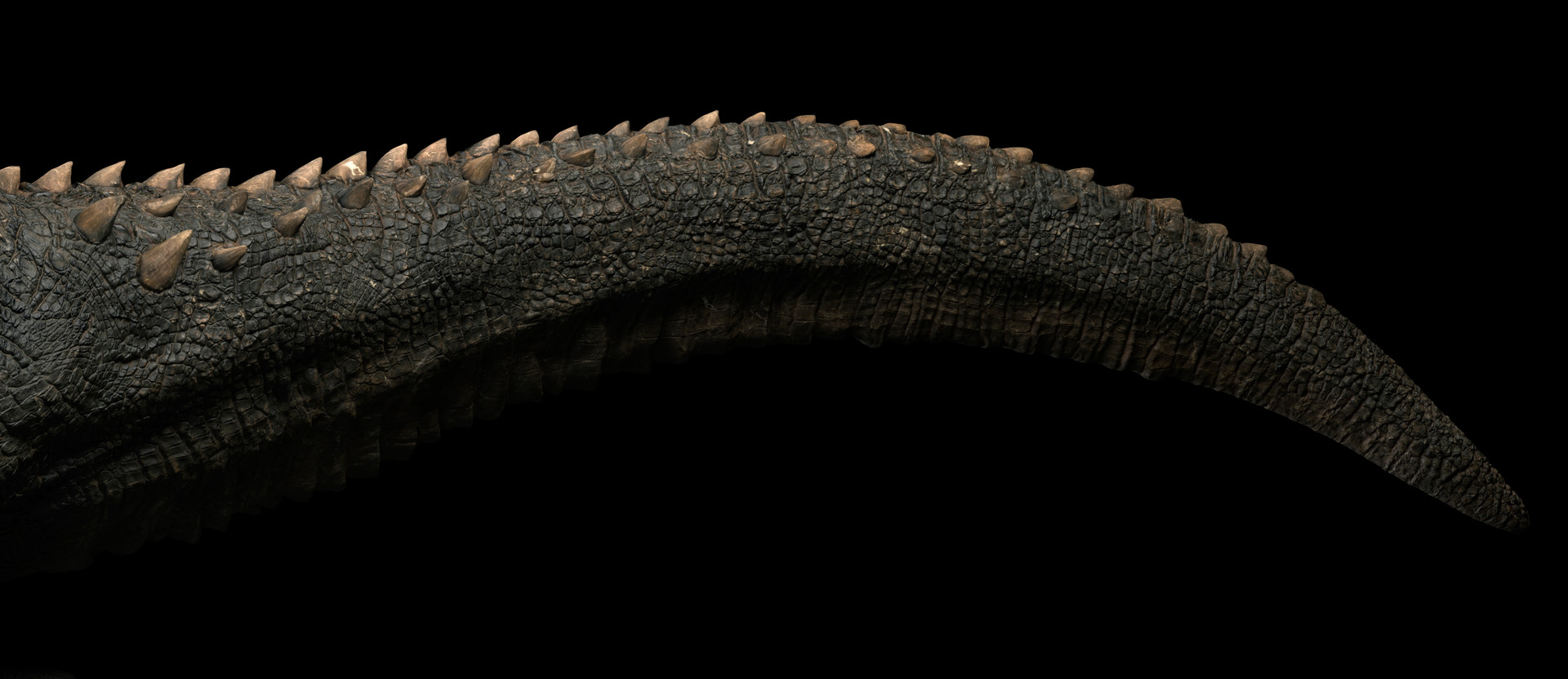 Gael kerchenbaum tail 001